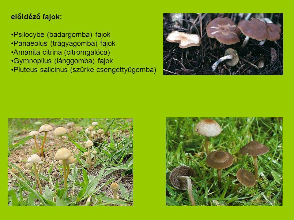 előidéző fajok: Psilocybe (badargomba) fajok. Panaeolus (trágyagomba) fajok. Amanita citrina (citromgalóca)