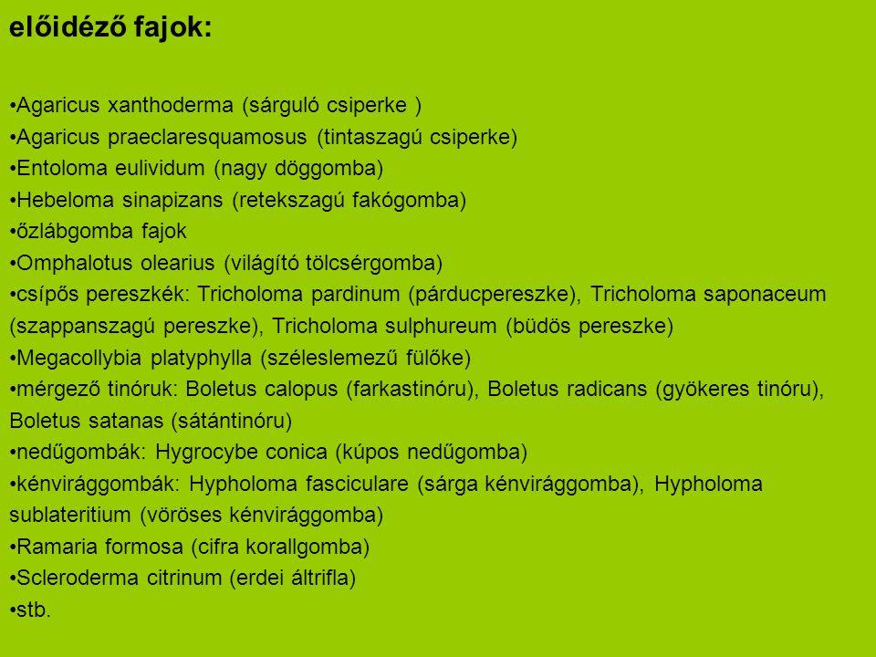 előidéző fajok: Agaricus xanthoderma (sárguló csiperke )