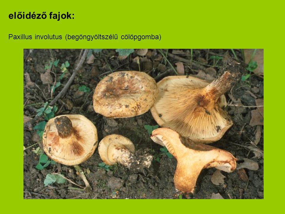 előidéző fajok: Paxillus involutus (begöngyöltszélű cölöpgomba)
