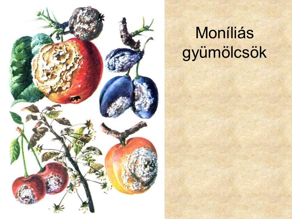 Moníliás gyümölcsök Dr. Hortobágyi: Növényrendszertan, Tankönyvkiadó, 1979.