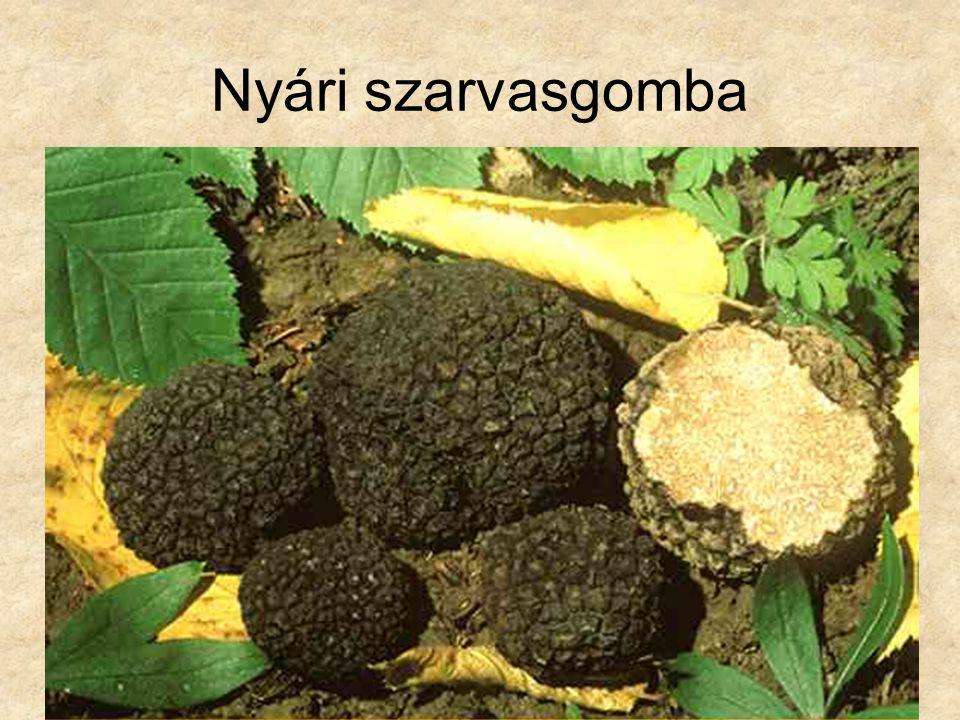 Nyári szarvasgomba Botanika CD, Kossuth Kiadó