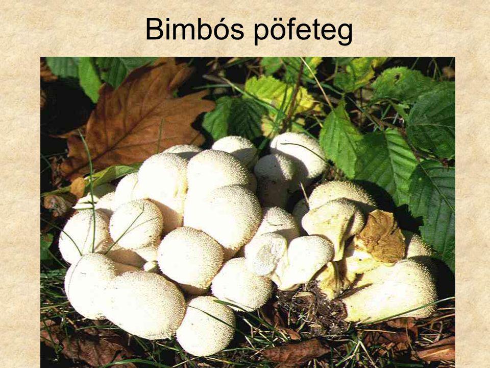 Bimbós pöfeteg Magyarország gombái CD, Kossuth Kiadó és ComCom Bt.
