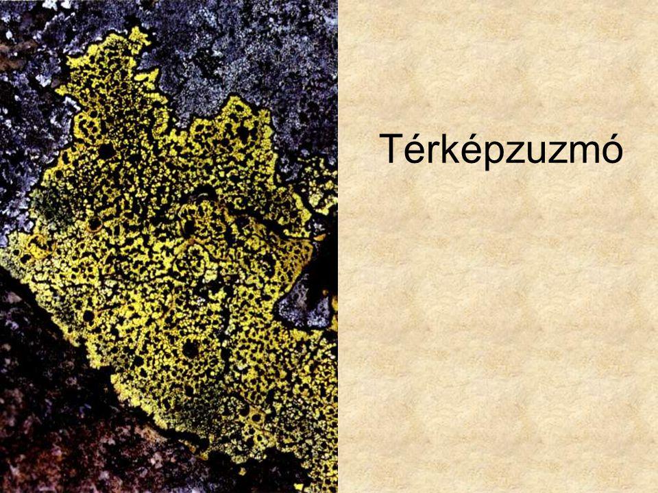 Térképzuzmó Kremer-Muhle: Zuzmók, mohák és harasztok, Magyar könyvklub Természetkalauz sorozat