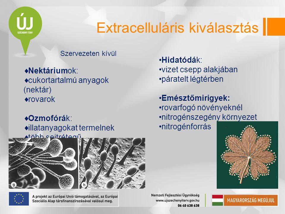 Extracelluláris kiválasztás