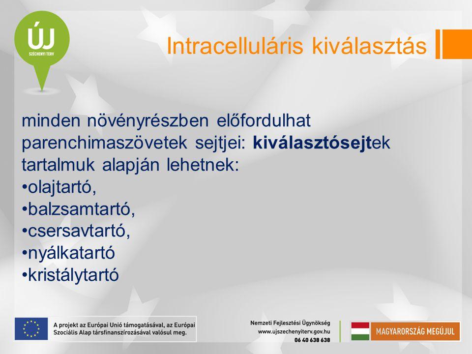 Intracelluláris kiválasztás
