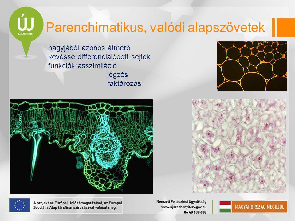 Parenchimatikus, valódi alapszövetek