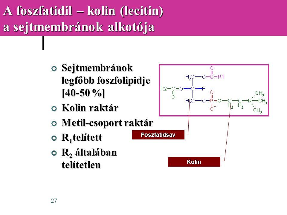A foszfatidil – kolin (lecitin) a sejtmembránok alkotója