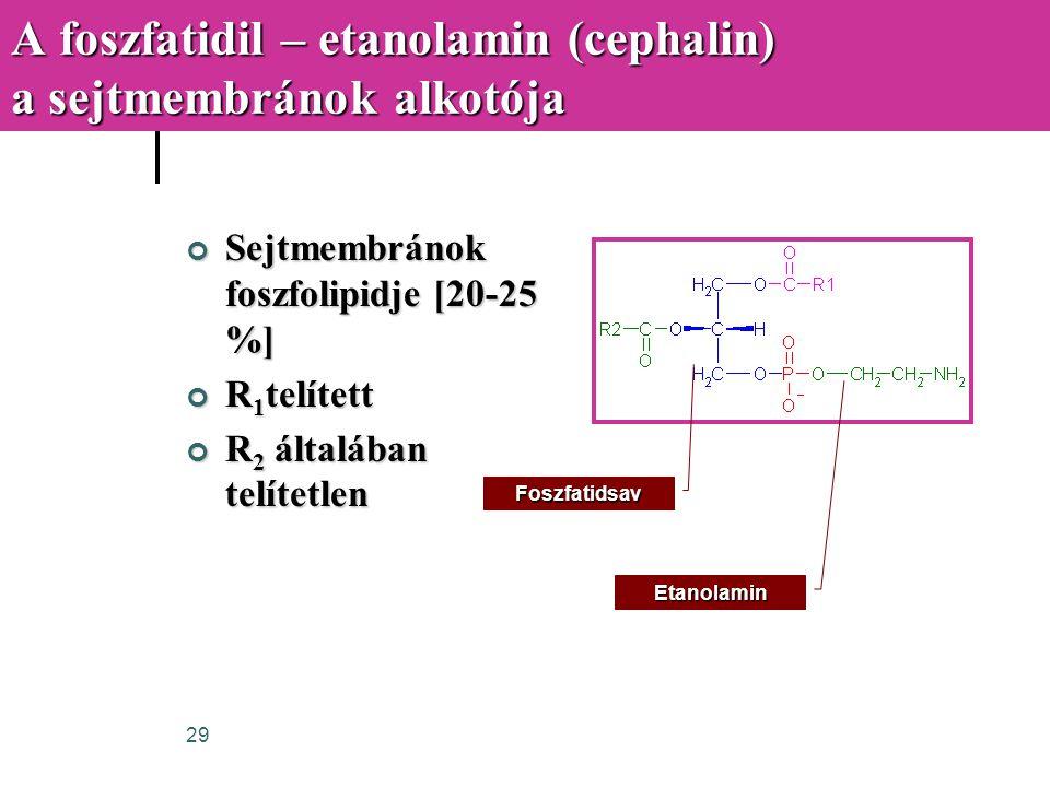 A foszfatidil – etanolamin (cephalin) a sejtmembránok alkotója