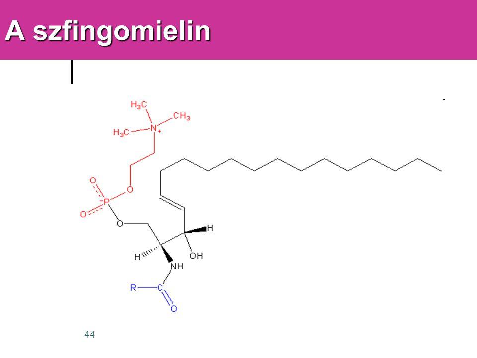A szfingomielin