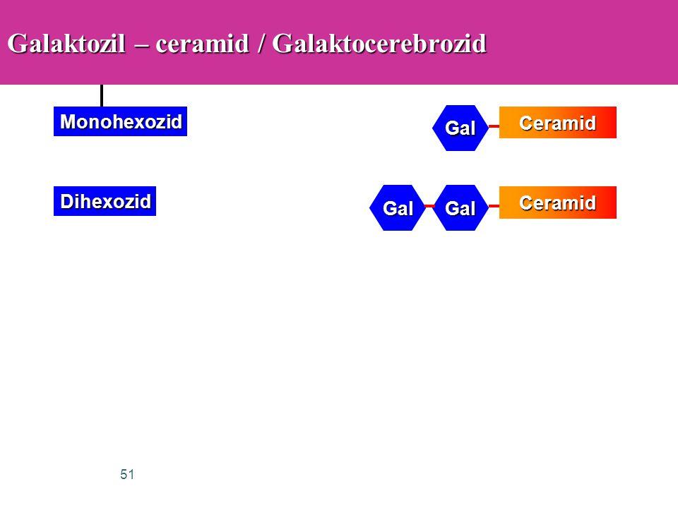 Galaktozil – ceramid / Galaktocerebrozid