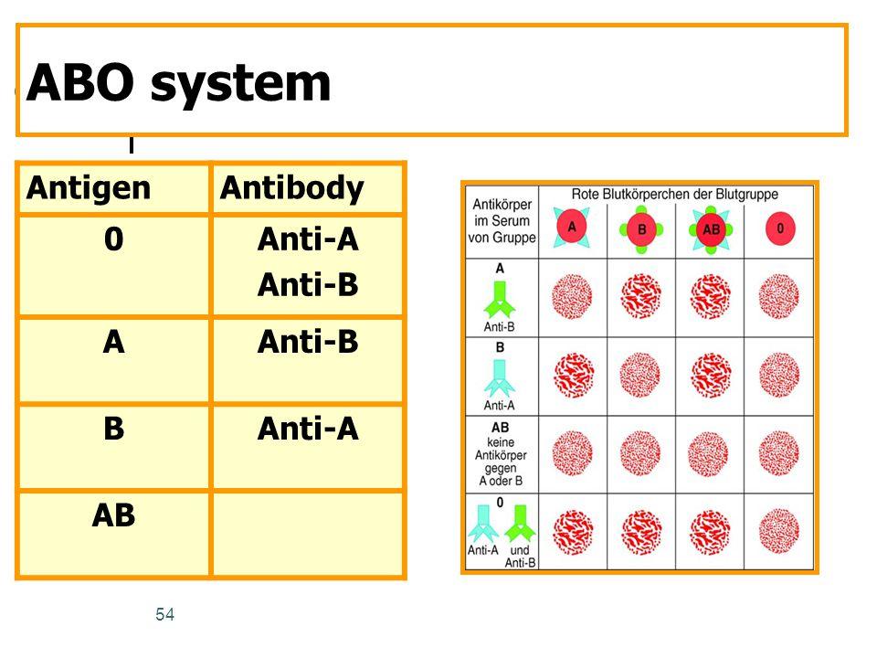 ABO system Antigen Antibody Anti-A Anti-B A B AB