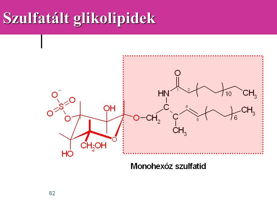 Szulfatált glikolipidek
