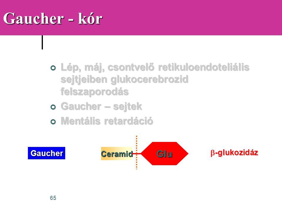 Gaucher - kór Lép, máj, csontvelő retikuloendoteliális sejtjeiben glukocerebrozid felszaporodás. Gaucher – sejtek.