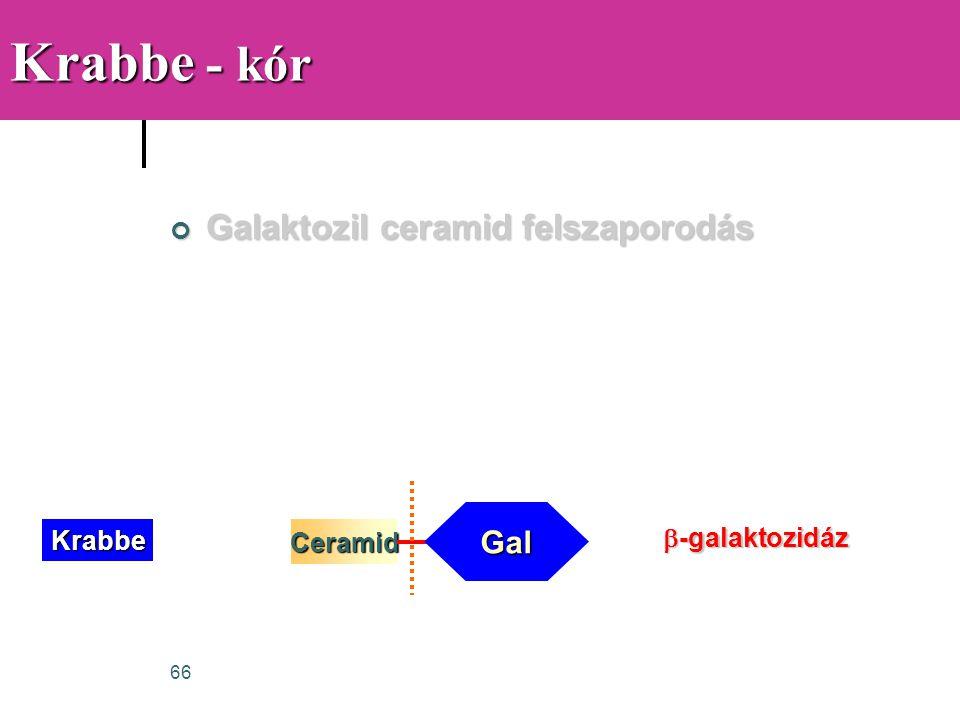 Krabbe - kór Galaktozil ceramid felszaporodás Gal b-galaktozidáz