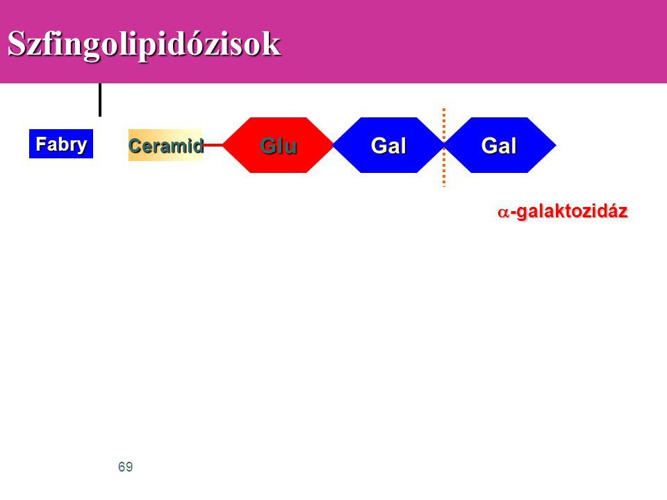 Szfingolipidózisok Glu Gal Gal Fabry Ceramid a-galaktozidáz