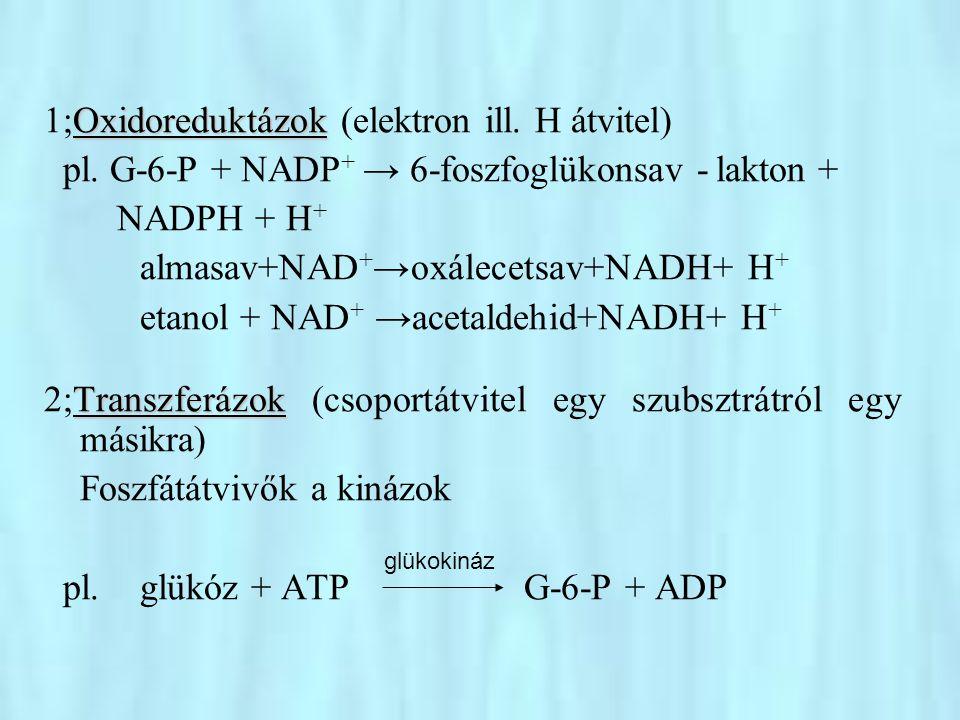 1;Oxidoreduktázok (elektron ill. H átvitel)