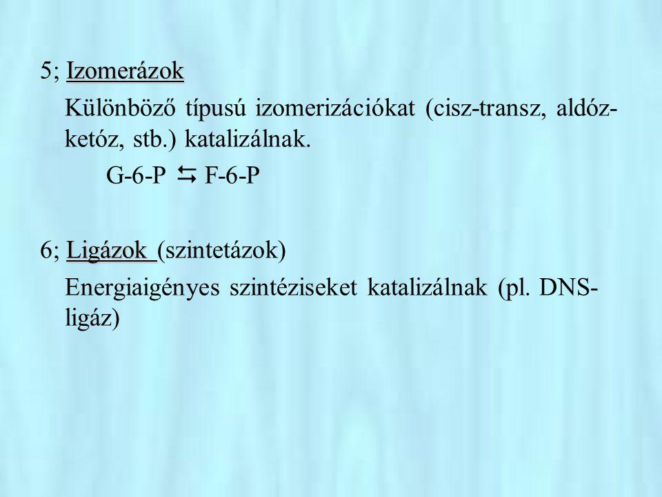5; Izomerázok Különböző típusú izomerizációkat (cisz-transz, aldóz-ketóz, stb.) katalizálnak. G-6-P  F-6-P.
