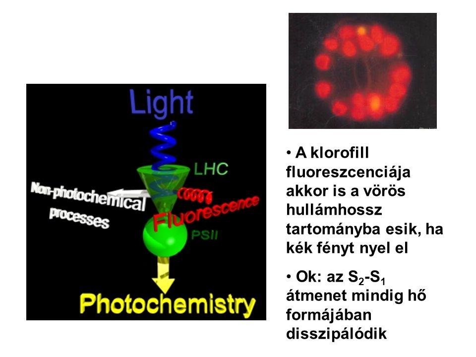 A klorofill fluoreszcenciája akkor is a vörös hullámhossz tartományba esik, ha kék fényt nyel el
