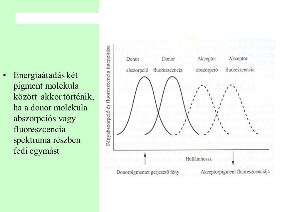 Energiaátadás két pigment molekula között akkor történik, ha a donor molekula abszorpciós vagy fluoreszcencia spektruma részben fedi egymást