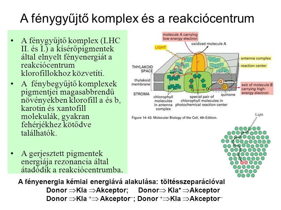 A fénygyűjtő komplex és a reakciócentrum