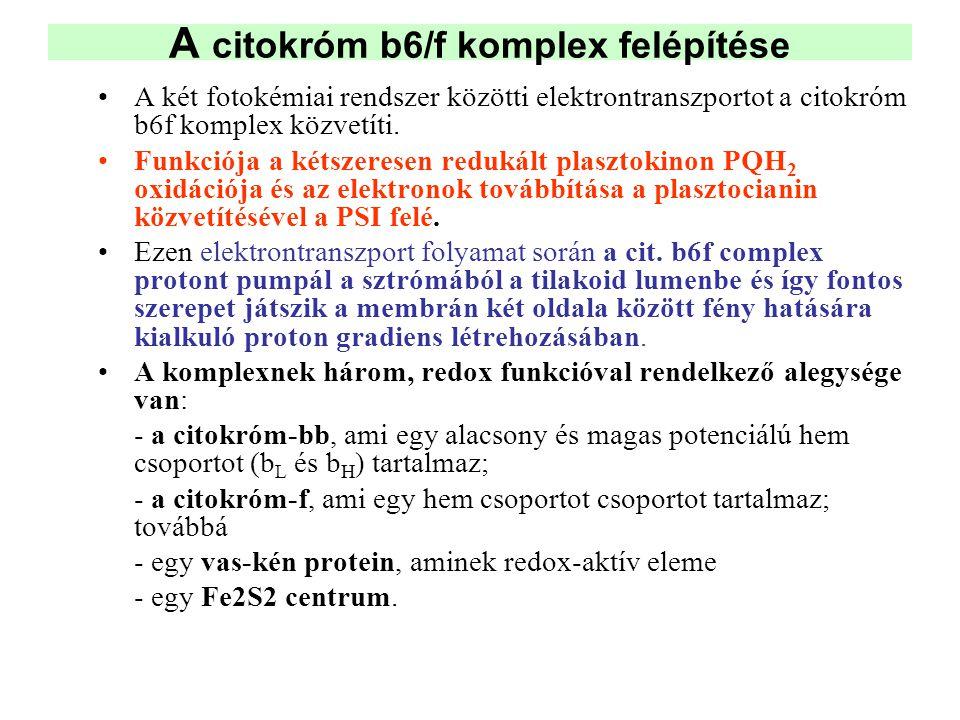 A citokróm b6/f komplex felépítése