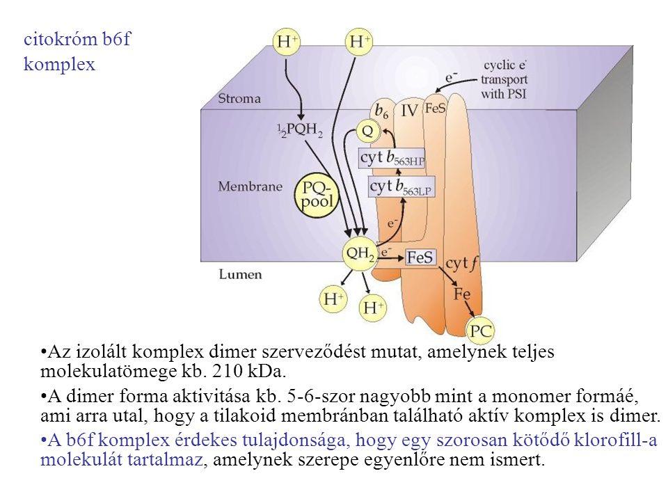 citokróm b6f komplex Az izolált komplex dimer szerveződést mutat, amelynek teljes molekulatömege kb. 210 kDa.