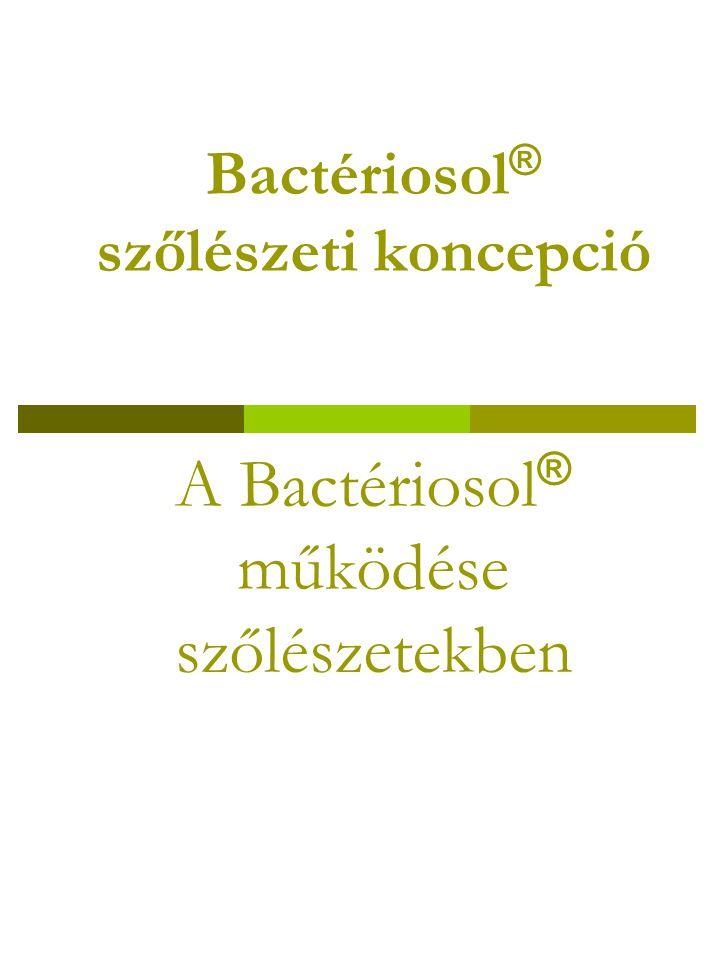 Bactériosol® szőlészeti koncepció A Bactériosol® működése szőlészetekben