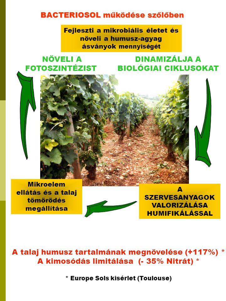 BACTERIOSOL működése szőlőben
