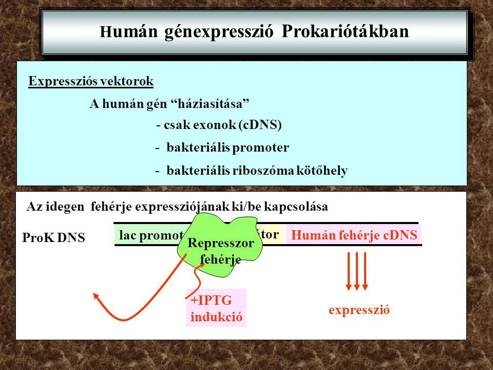 Humán génexpresszió Prokariótákban