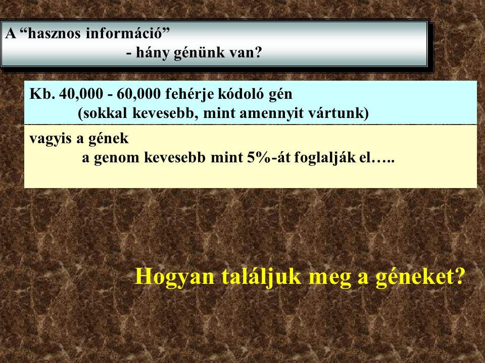 Hogyan találjuk meg a géneket