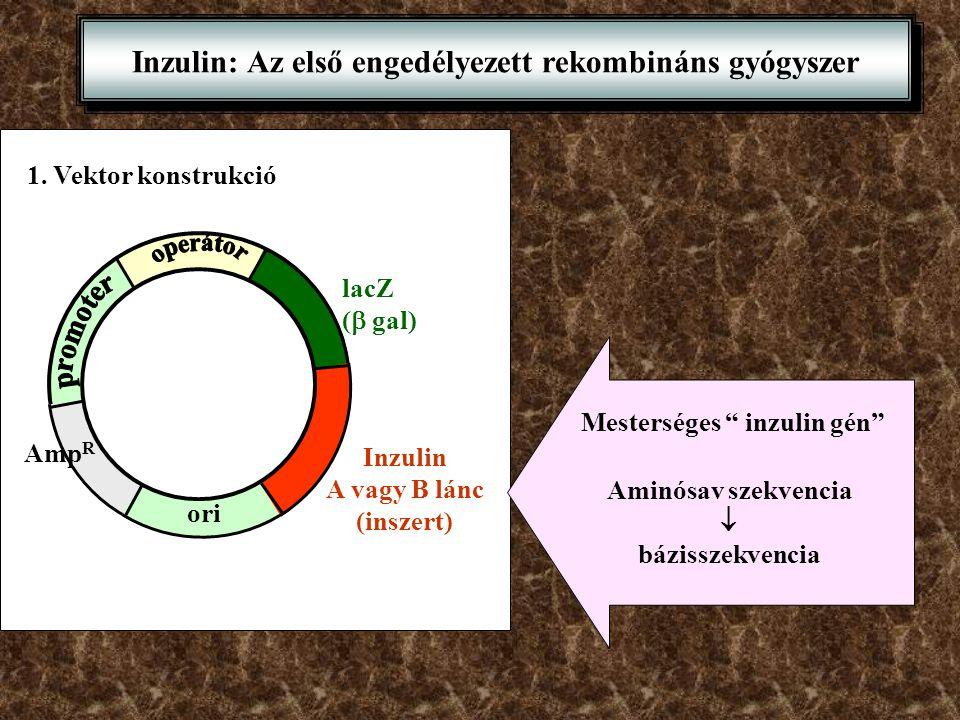 Inzulin: Az első engedélyezett rekombináns gyógyszer