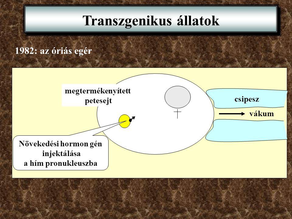 Transzgenikus állatok