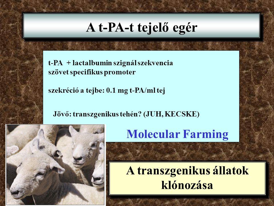 A transzgenikus állatok klónozása