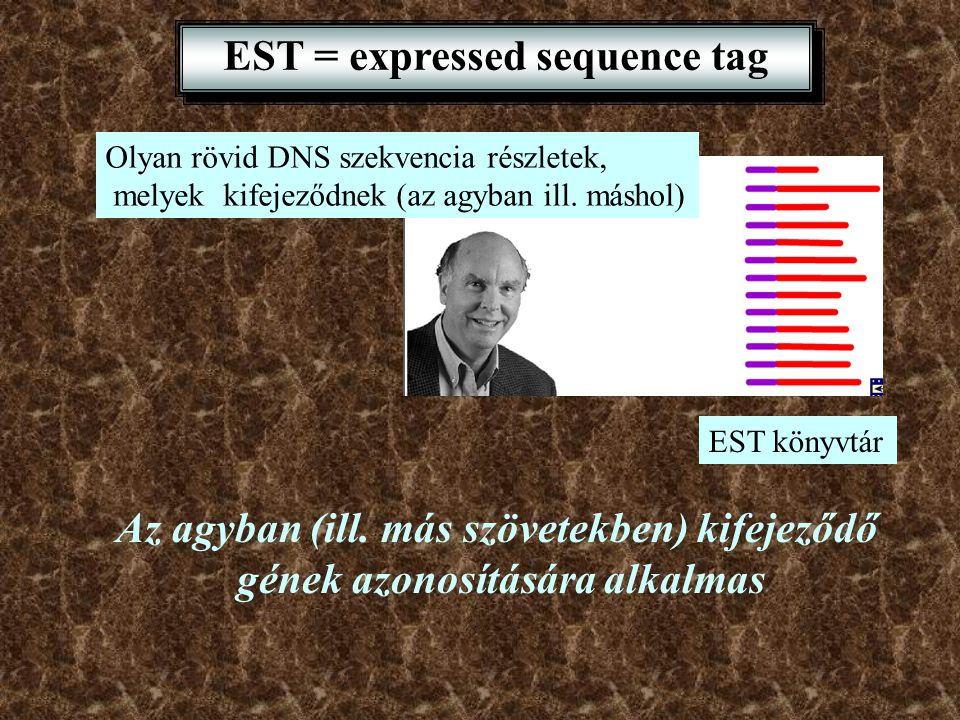 EST = expressed sequence tag