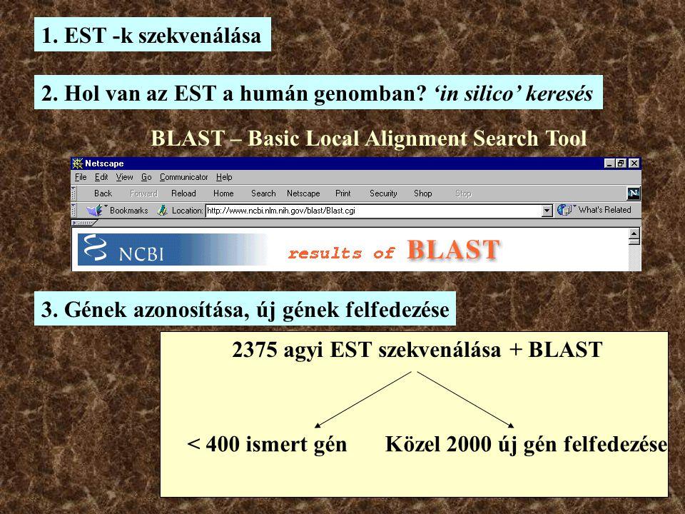 2. Hol van az EST a humán genomban 'in silico' keresés