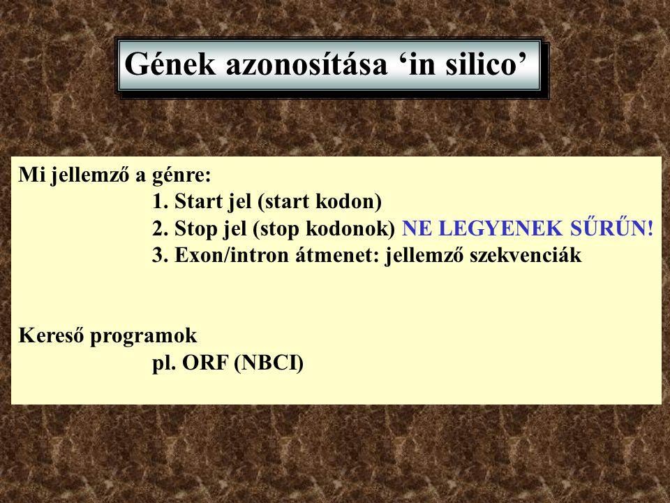 Gének azonosítása 'in silico'