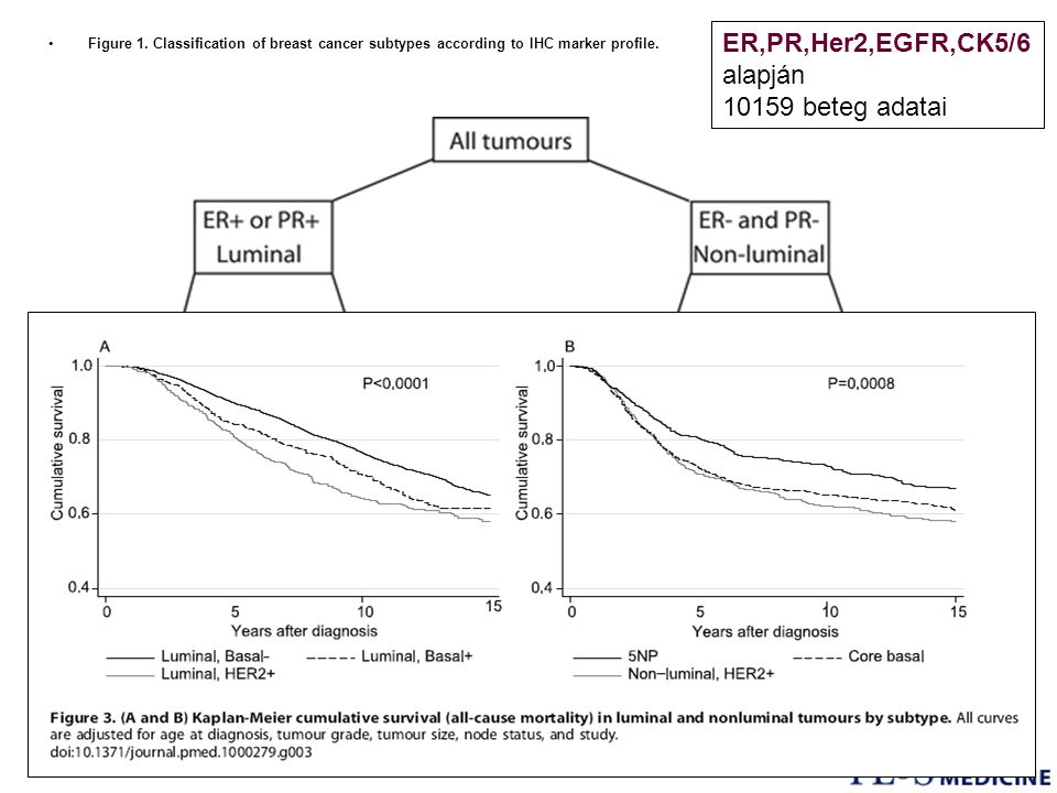 ER,PR,Her2,EGFR,CK5/6 alapján 10159 beteg adatai