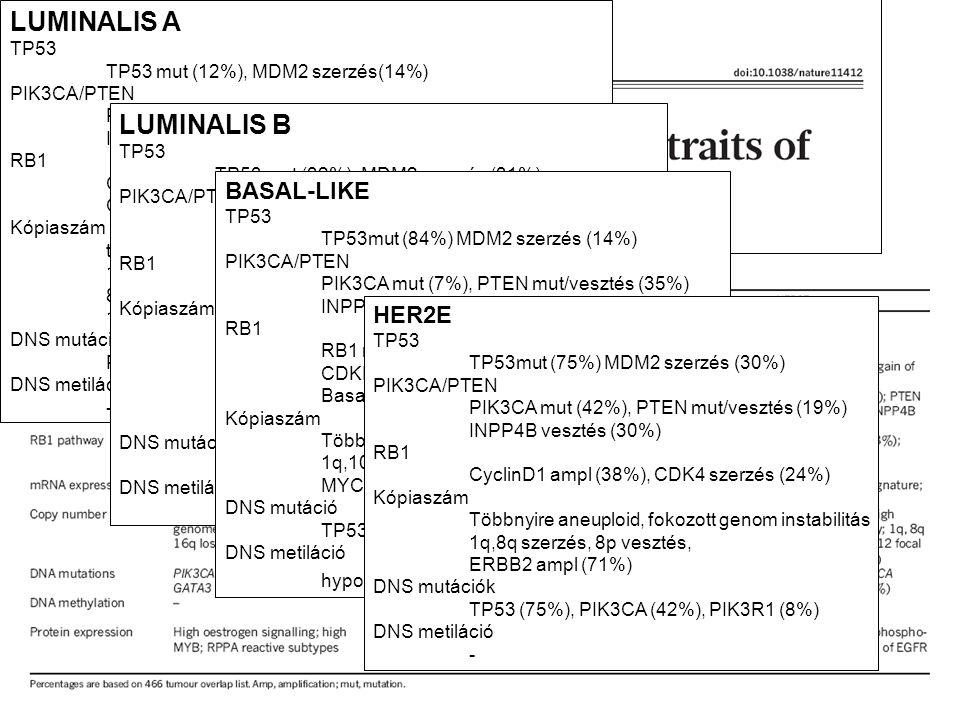 LUMINALIS A LUMINALIS B BASAL-LIKE HER2E TP53