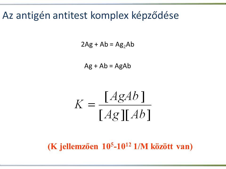 Az antigén antitest komplex képződése