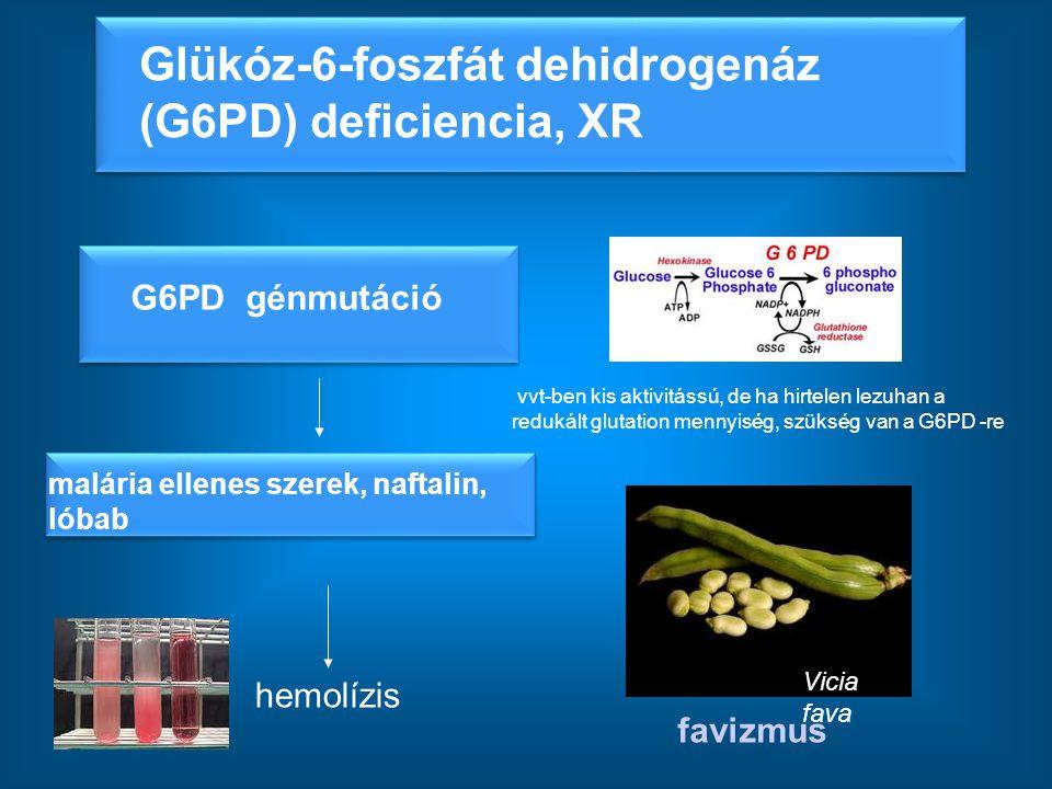 Glükóz-6-foszfát dehidrogenáz (G6PD) deficiencia, XR