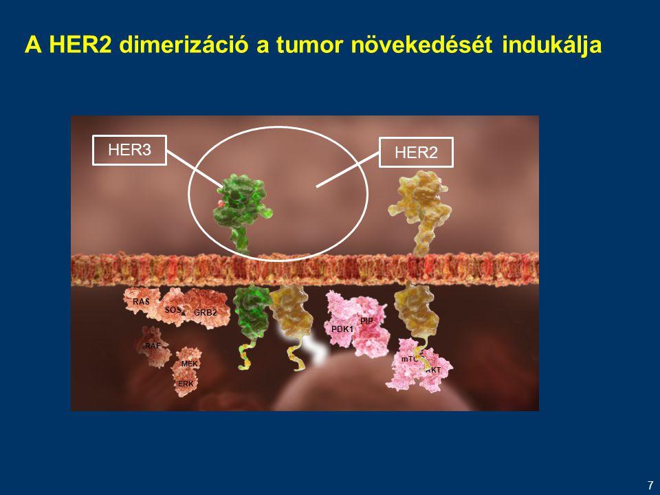 A HER2 dimerizáció a tumor növekedését indukálja