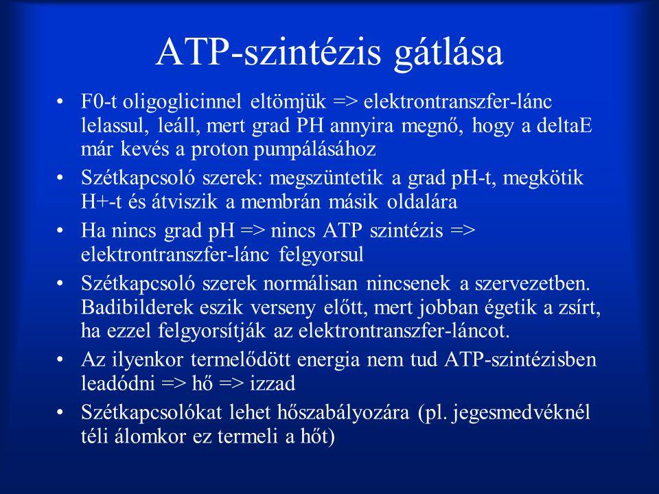 ATP-szintézis gátlása