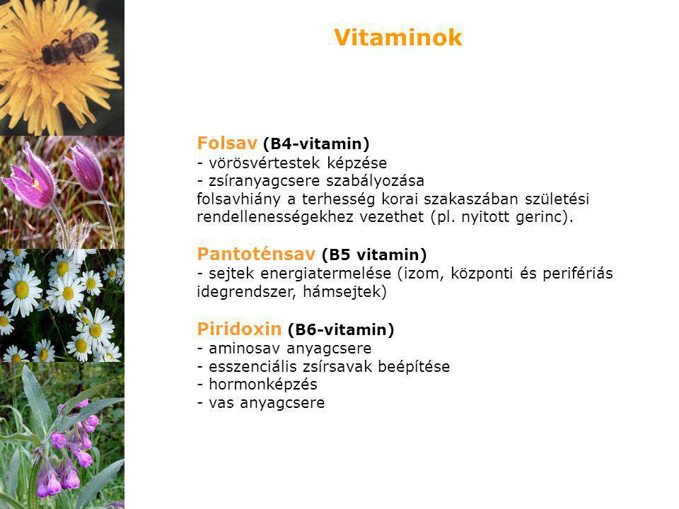Vitaminok Folsav (B4-vitamin) Pantoténsav (B5 vitamin)