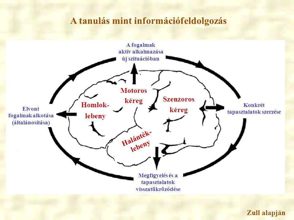 A tanulás mint információfeldolgozás tapasztalatok szerzése