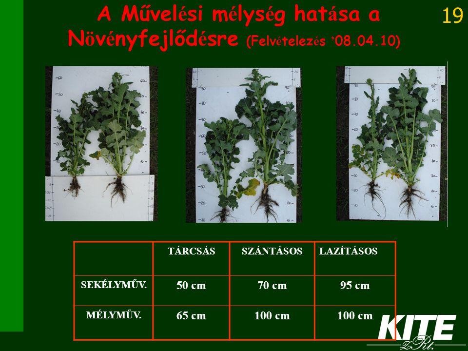 A Művelési mélység hatása a Növényfejlődésre (Felvételezés '08.04.10)