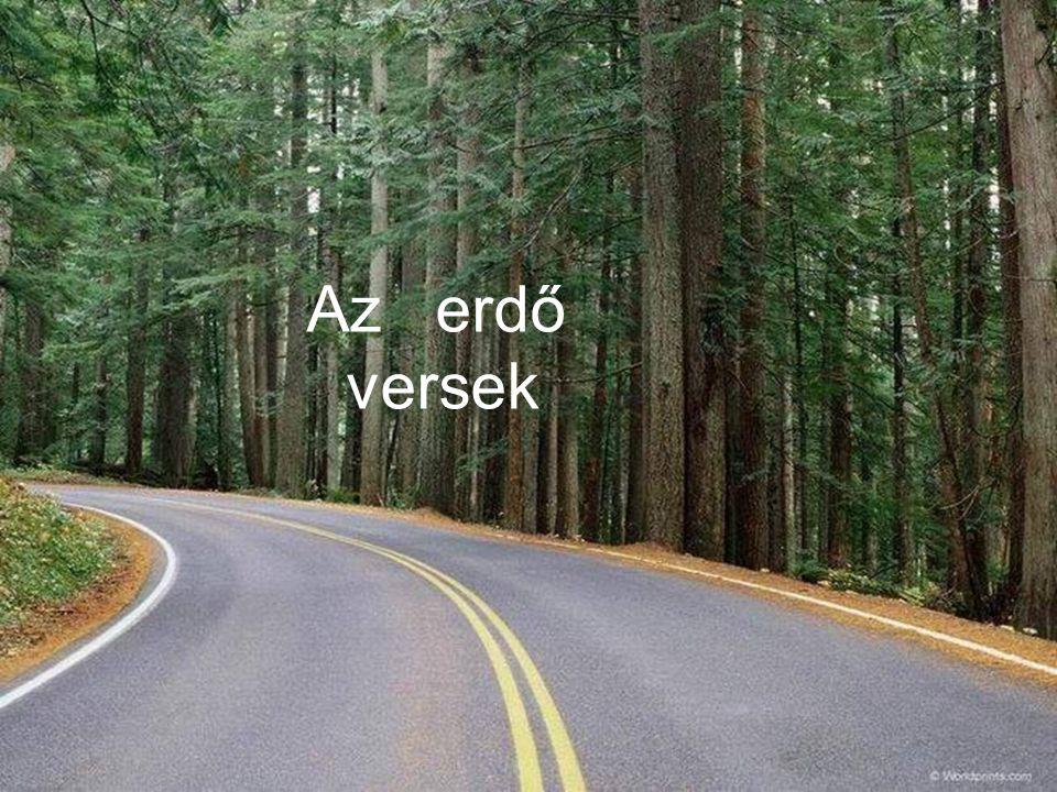 Az erdő versek