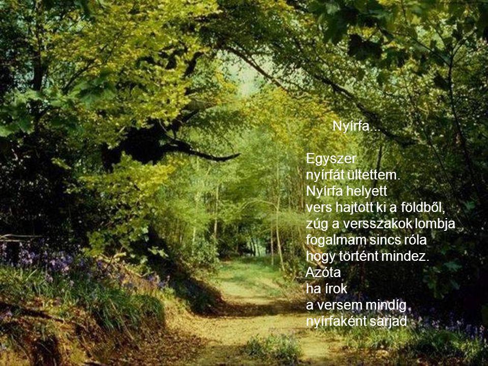 Nyírfa... Egyszer. nyírfát ültettem. Nyírfa helyett. vers hajtott ki a földből, zúg a versszakok lombja.