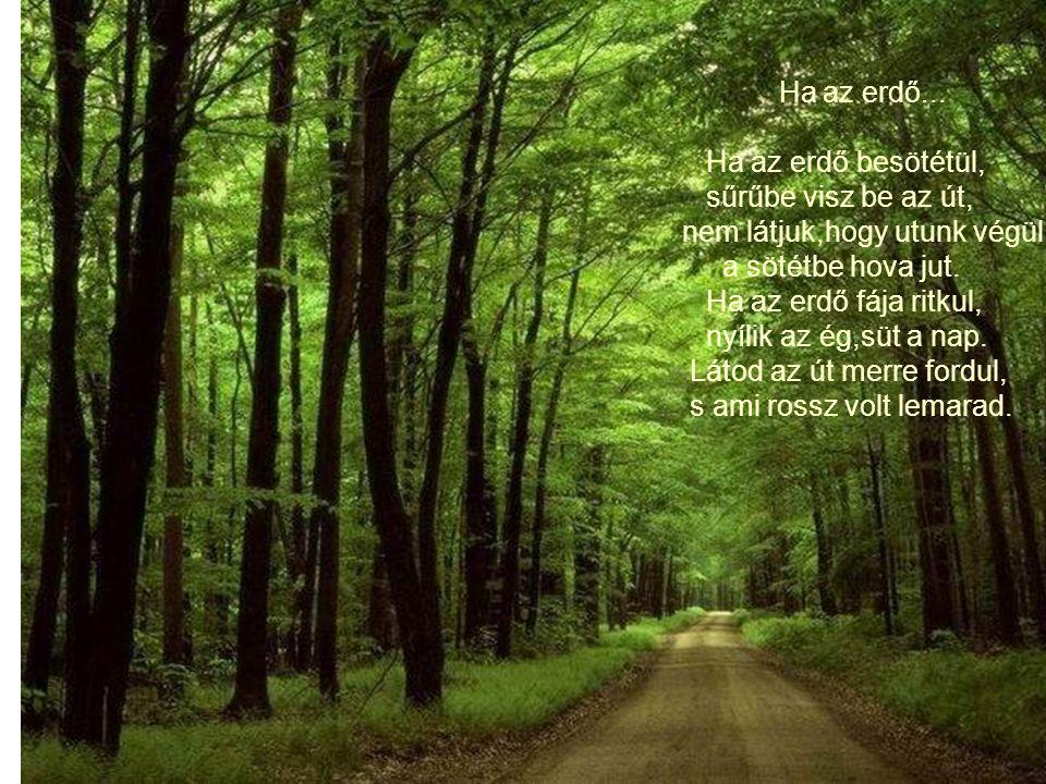 Ha az erdő... Ha az erdő besötétül, sűrűbe visz be az út, nem látjuk,hogy utunk végül. a sötétbe hova jut.