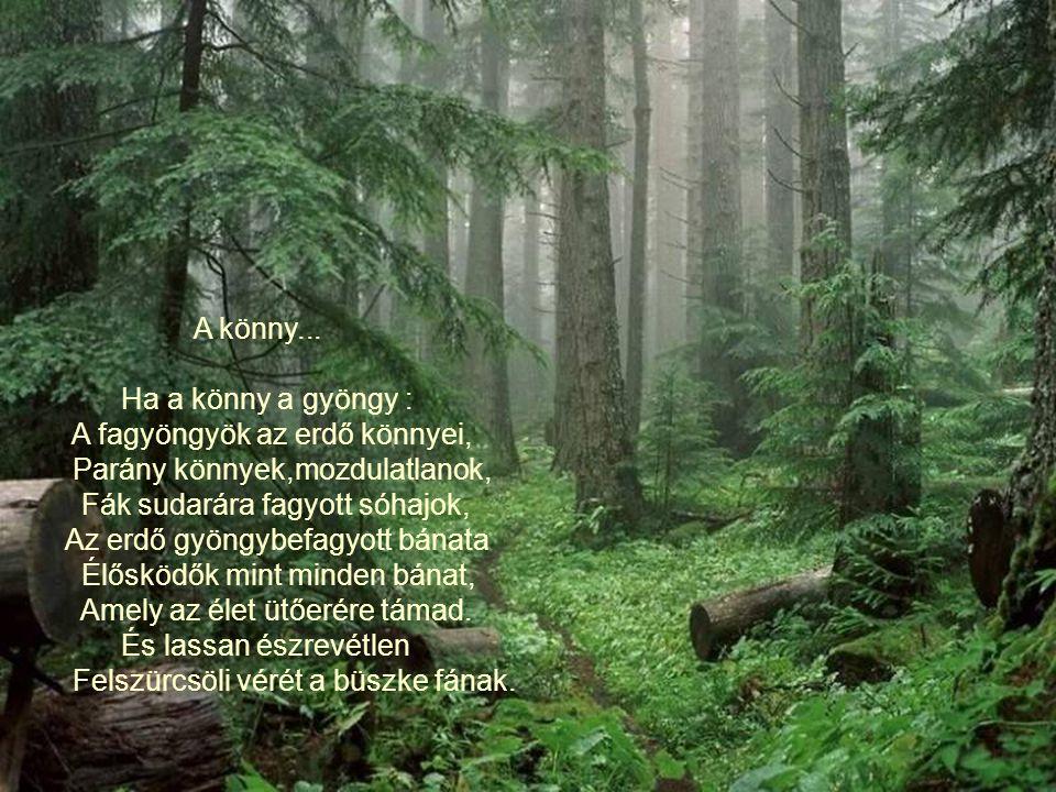 A könny... Ha a könny a gyöngy : A fagyöngyök az erdő könnyei, Parány könnyek,mozdulatlanok, Fák sudarára fagyott sóhajok,