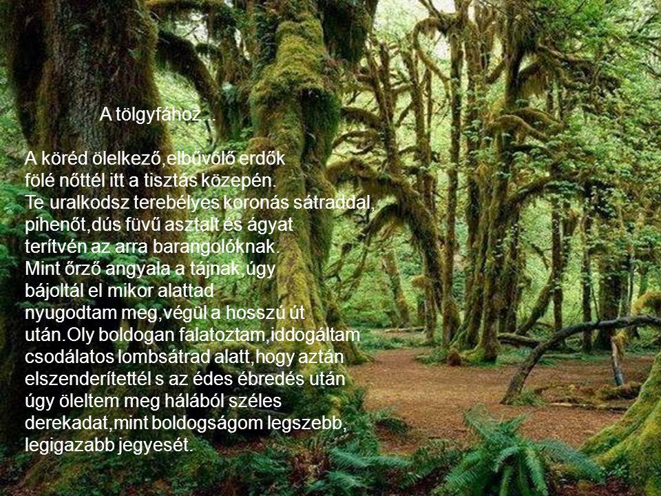 A tölgyfához... A köréd ölelkező,elbűvölő erdők. fölé nőttél itt a tisztás közepén. Te uralkodsz terebélyes koronás sátraddal,